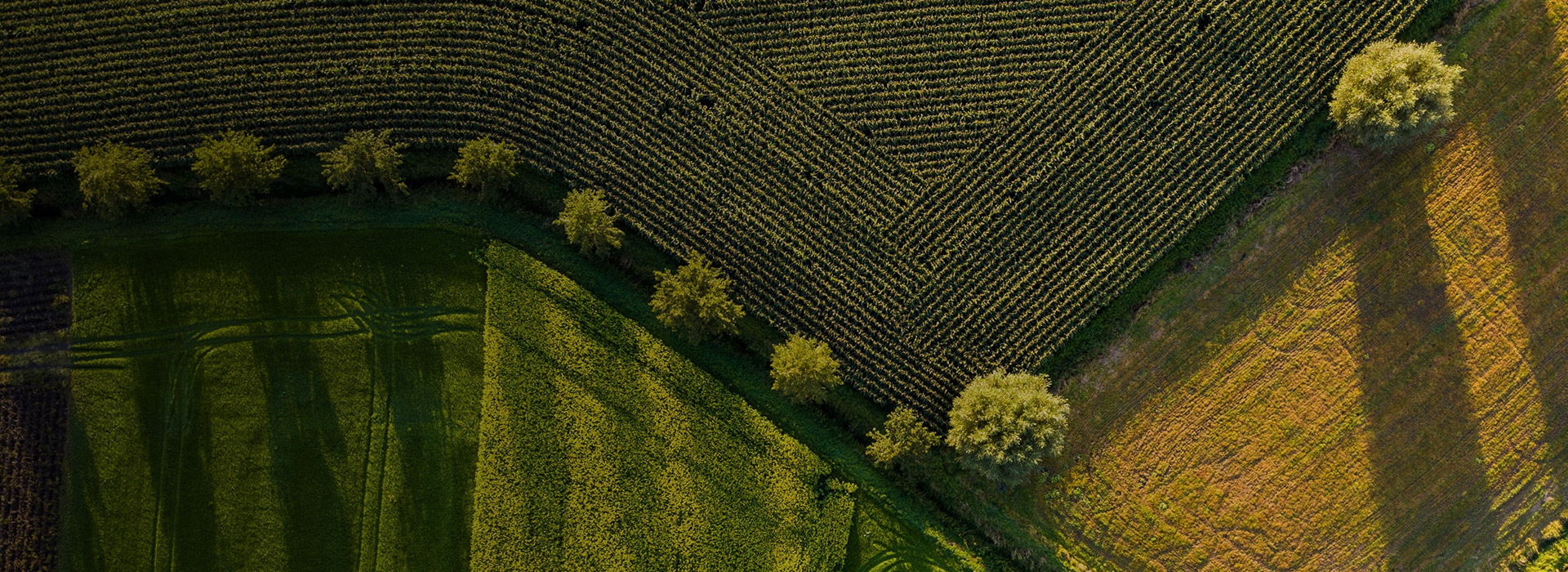 How to reap the benefits of agriculture drone software